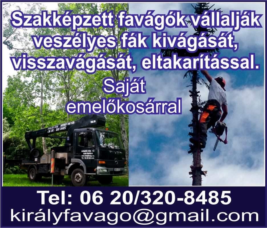 Fakivágás, Veszélyes fák kivágása emelőkosárral - Király Zoltán